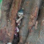 """""""สงสารน้อง"""" ตุ๊กตา """"กุมารทอง"""" ติดอยู่ในต้นโพธิ์ คอหวยช่วยออกมาได้!!!"""