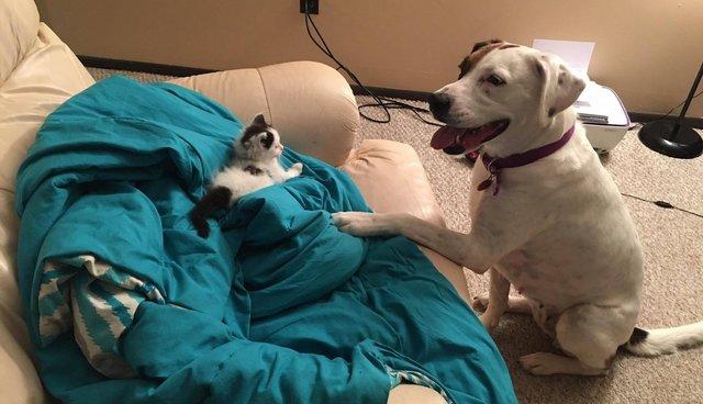 """เมื่อเพื่อนบ้านนำลูกแมวมาฝาก """"ทาสหมา"""" เลี้ยง เรื่องน่ารักจึงเกิดขึ้น"""